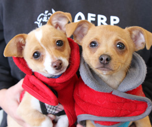 Puppies-foster-web